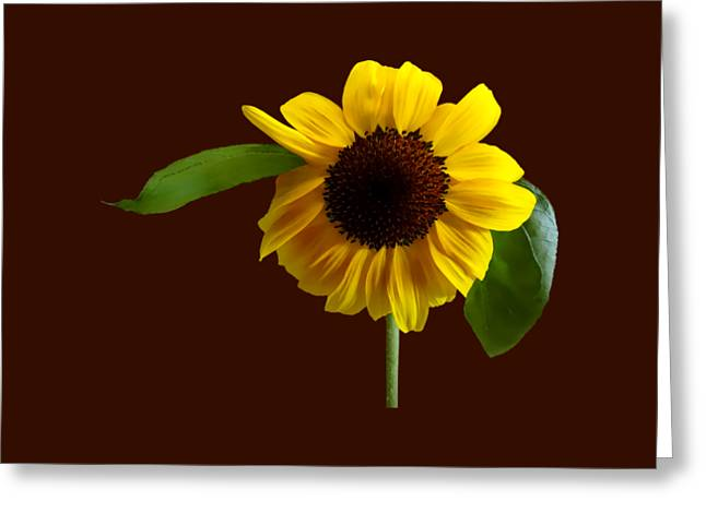 Golden Sunflower Greeting Card by Susan Savad