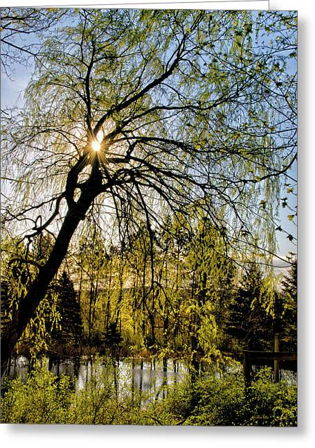 Golden Sunlight Through Green Tree Greeting Card by Christina Rollo