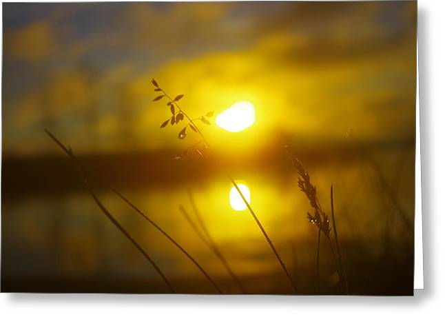 Golden Sunrise Greeting Card by Tim Beebe