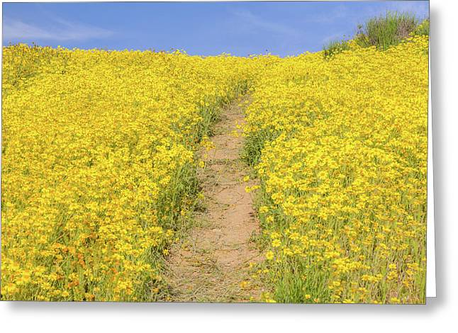 Greeting Card featuring the photograph Golden Trail by Marc Crumpler