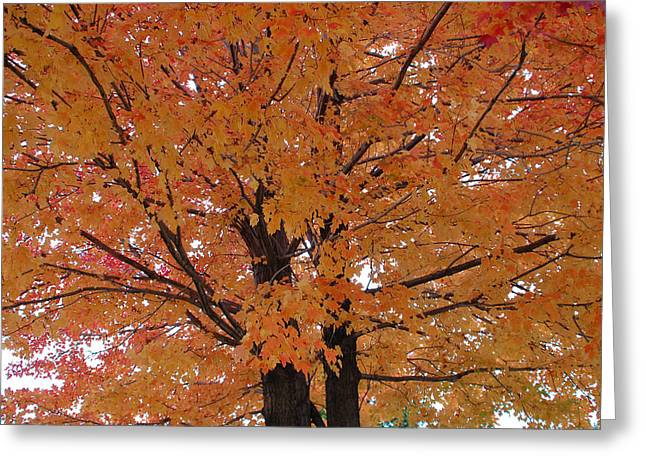Golden Tree Greeting Card by Aimee L Maher Photography and Art Visit ALMGallerydotcom
