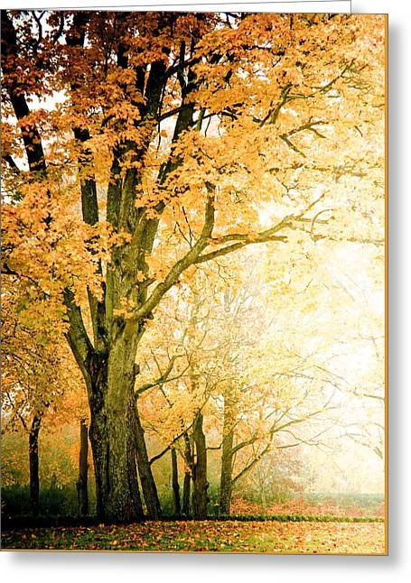 Golden Tree Greeting Card by Maggie Terlecki
