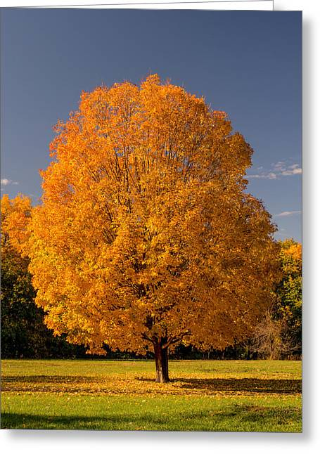 Golden Tree Of Autumn Greeting Card