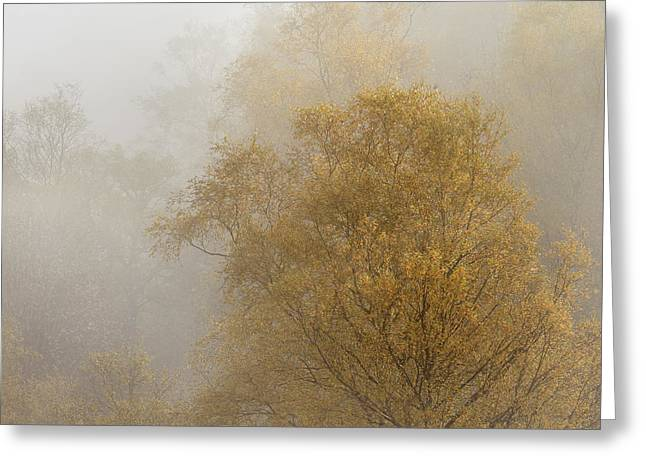 Golden Trees Greeting Card by Rod McLean