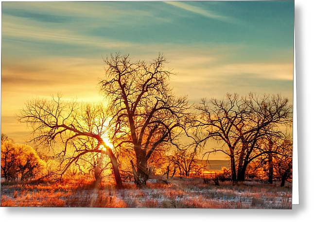 Golden Trees Greeting Card by Todd Klassy
