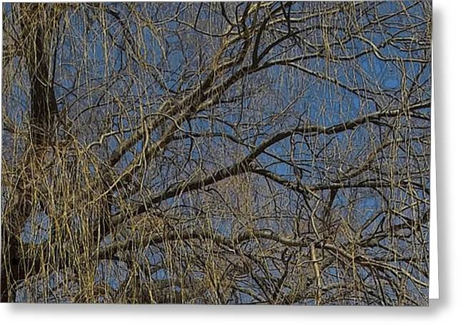 Weeping Greeting Cards - Golden Treetop Greeting Card by Anne Cameron Cutri