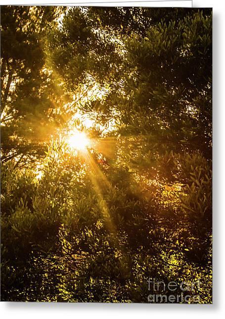 Golden Treetops Greeting Card