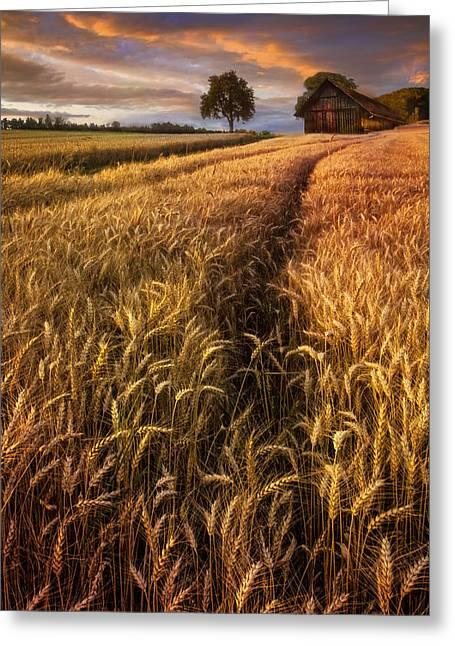 Golden Waves Of Grain Greeting Card by Debra and Dave Vanderlaan