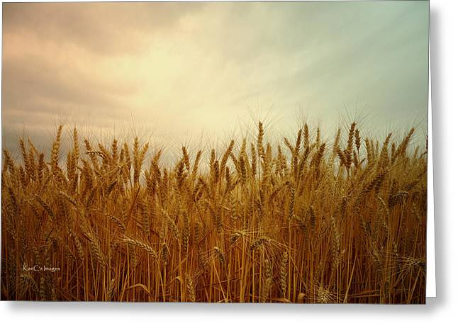 Golden Wheat Greeting Card by Kae Cheatham