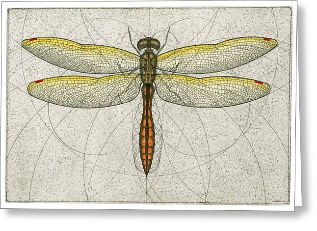 Drafting Greeting Cards - Golden Winged Skimmer Greeting Card by Charles Harden