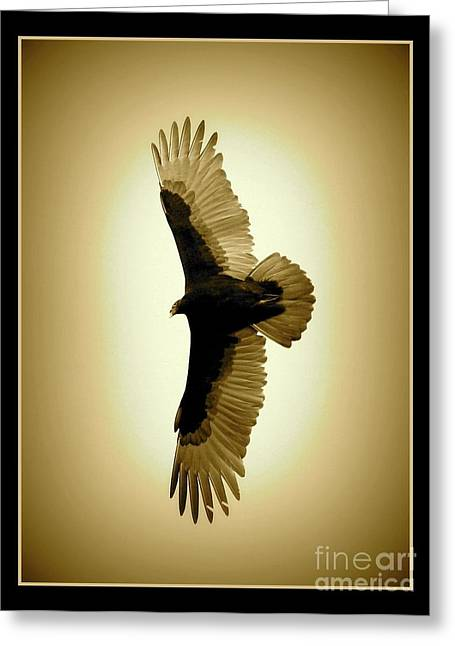 Golden-winged Vulture Greeting Card by Carol Groenen