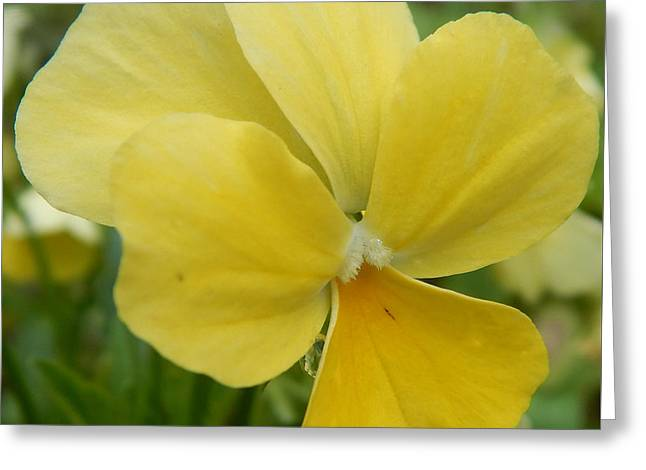 Golden Yellow Flower Greeting Card
