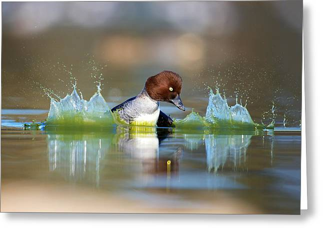 Goldeneye Greeting Card by Thy Bun