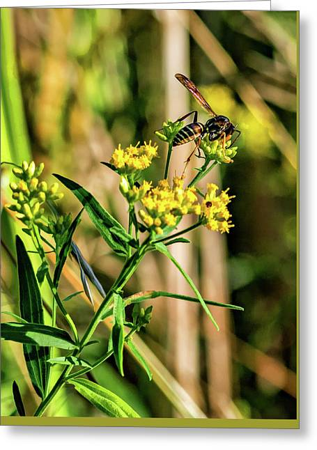 Goldenrod And Wasp - Paint Greeting Card by Steve Harrington