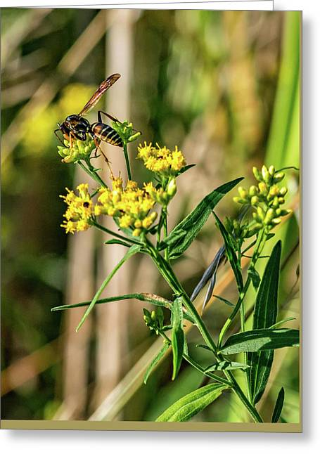 Goldenrod And Wasp Greeting Card by Steve Harrington
