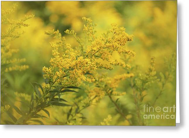 Goldenrod Dream Greeting Card by Rachel Cohen