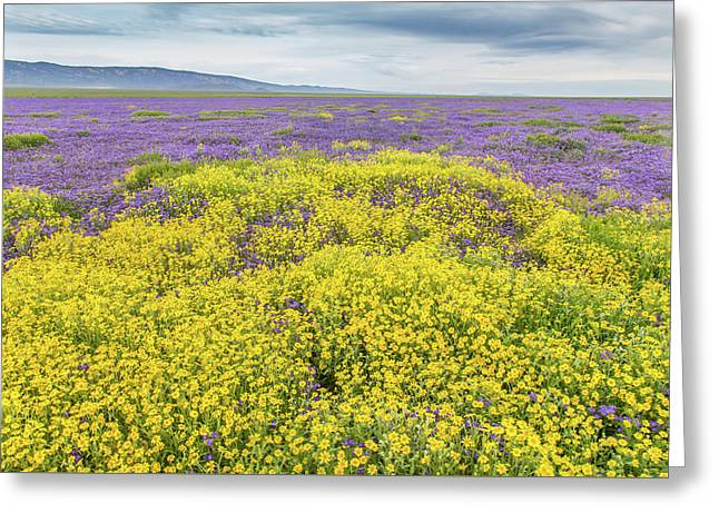 Greeting Card featuring the photograph Goldfield And Phacelia by Marc Crumpler