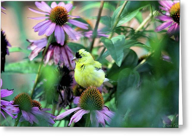 Goldfinch On Coneflowers Greeting Card