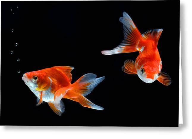 Goldfish Greeting Card by Dung Ma
