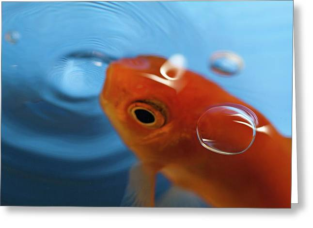 Goldfish Opening Its Mouth To Catch It's Food Greeting Card by Sami Sarkis