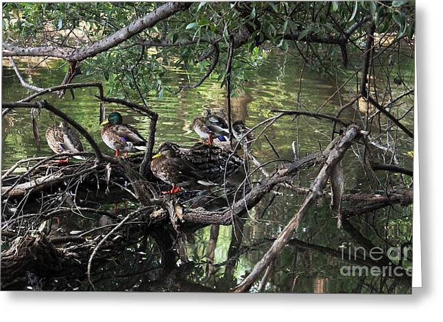 Gone Duck Hunting Greeting Card