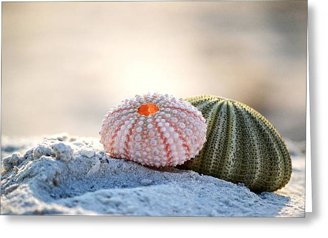 Gone Shelling Greeting Card