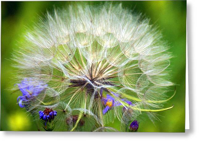 Gone To Seed Greeting Card by Marty Koch