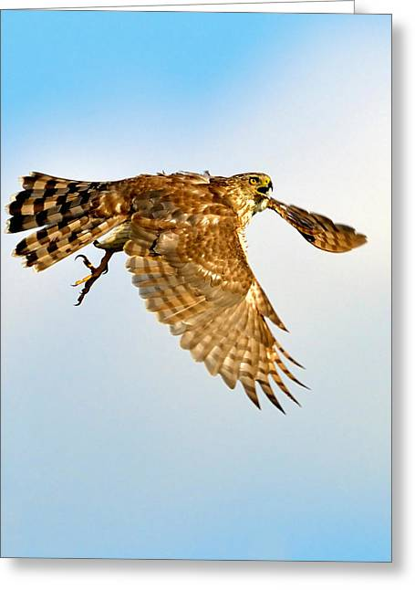 Good Hawk Hunting Greeting Card