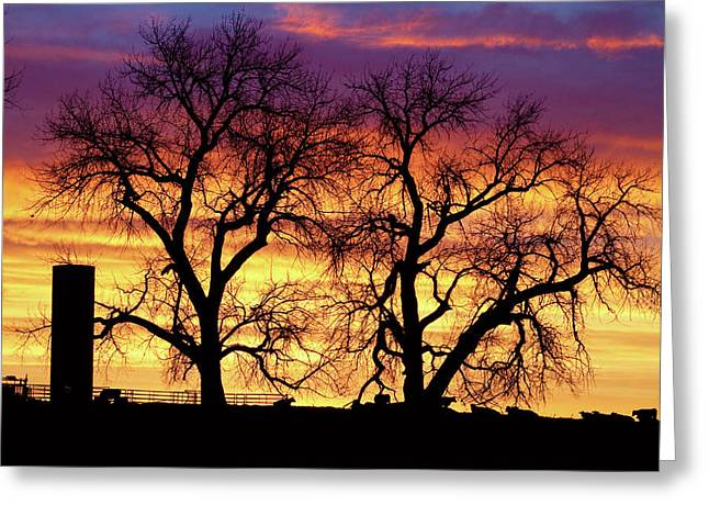 Sunset Prints Greeting Cards - Good Morning Cows Colorful Sunrise Greeting Card by James BO  Insogna