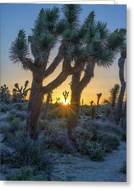 Good Morning From Joshua Tree Greeting Card