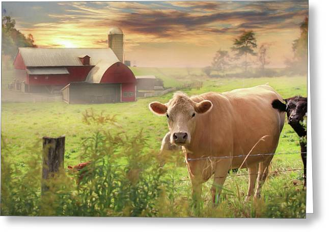 Greeting Card featuring the photograph Good Morning by Lori Deiter