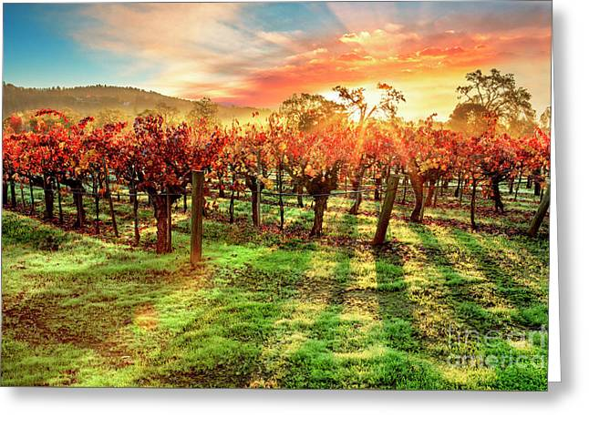 Good Morning Napa Greeting Card by Jon Neidert