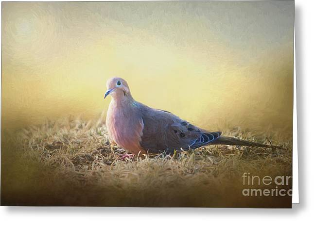 Good Mourning Dove Greeting Card