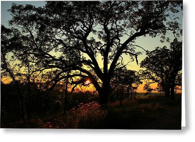 Good Night Tree Greeting Card