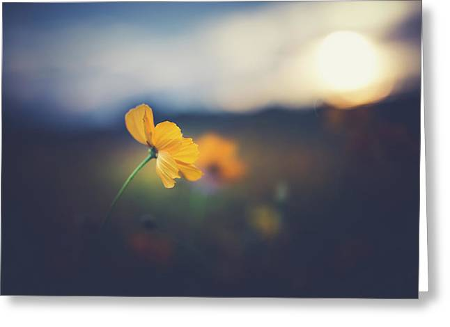 Greeting Card featuring the photograph Goodnight Sun by Shane Holsclaw