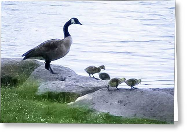 Goose And Chicks Greeting Card by Linda Chambers