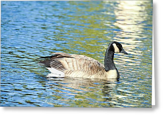 Greeting Card featuring the photograph Goose And Sun Reflections by David Lawson