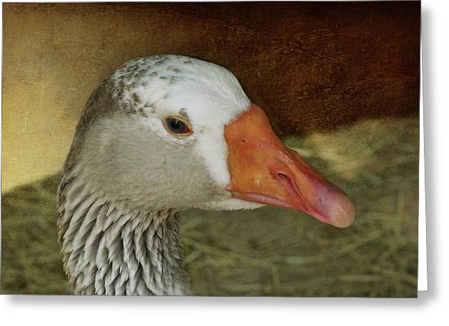 Goose - Domestic Greylag Greeting Card