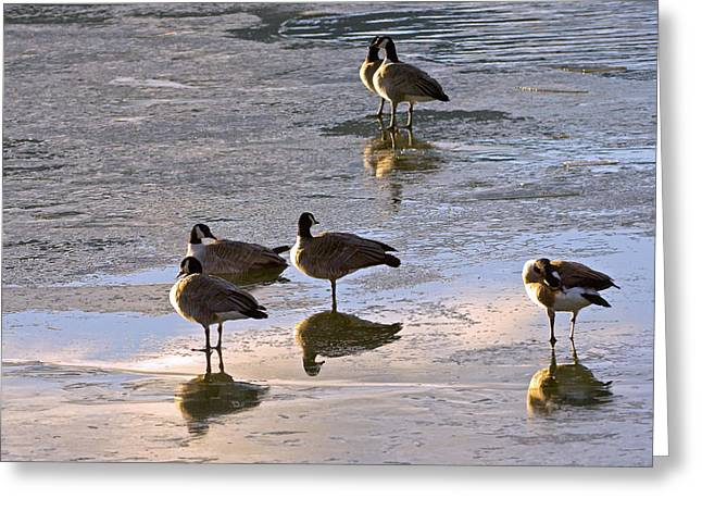 Goose Ice Refections Greeting Card by James Steele