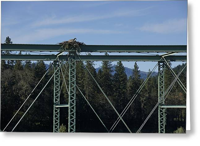 Goose On An Osprey Nest Greeting Card