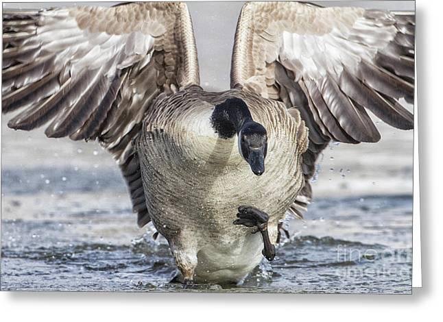 Goose On Inbound Flight Greeting Card