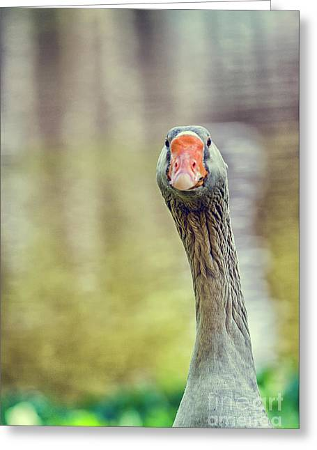 Goose Greeting Card by Patricia Hofmeester