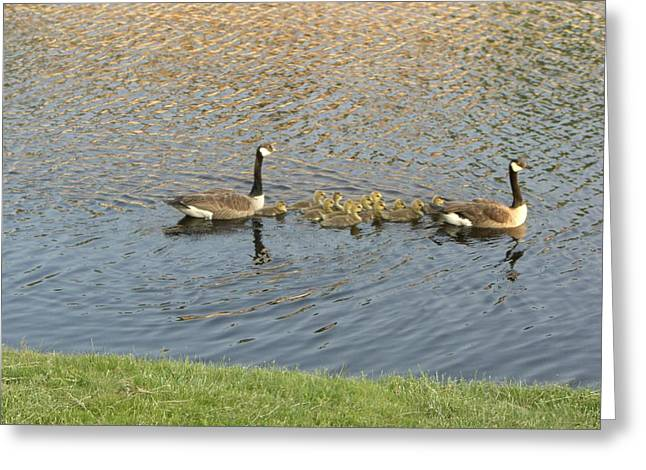 Goose Pond 1 Greeting Card by Nancy Ferrier