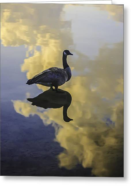 Greeting Card featuring the photograph Goose Silhouette 2 by Sherri Meyer