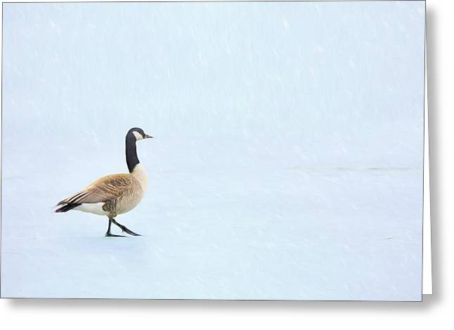 Greeting Card featuring the photograph Goose Step by Nikolyn McDonald