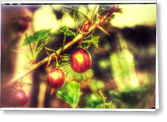 Greeting Card featuring the photograph Gooseberry Fool by Isabella F Abbie Shores FRSA