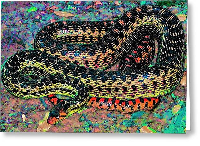 Gopher Snake Greeting Card by Pamela Cooper