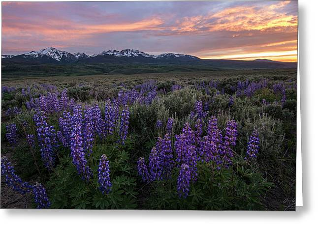 Gore Range Sunset Greeting Card by Aaron Spong