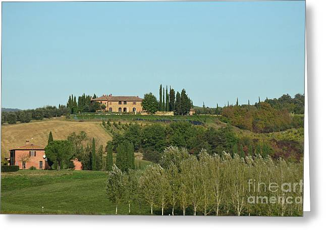 Gorgeous Vineyard In Tuscany Italy Greeting Card by DejaVu Designs