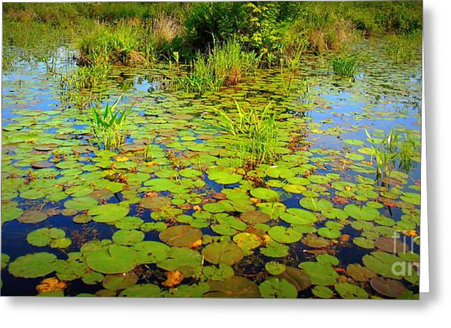 Gorham Pond Lily Pads Greeting Card